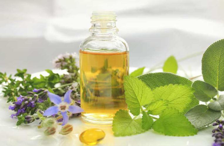 Olio Di Borragine Propriet Benefici Utilizzi